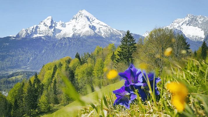Alpenblumen-Wanderung
